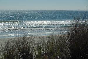 beachgrasswater
