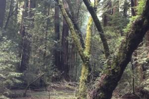 treesCal