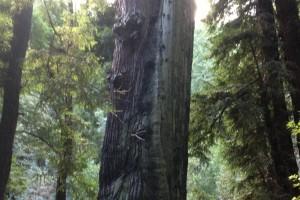 Treesmuir