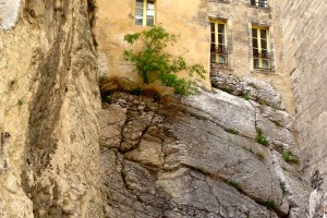 Trees can be found in the strangest places... this small tree clings to life in Avignon, France. Photo by Bojinka Bishop.