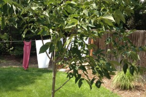 My unobtrusive clothesline - two posts, a retractable line that pulls out wen i want to use it.