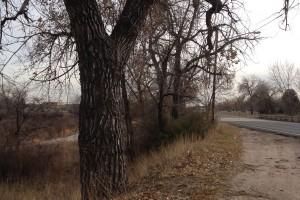 Trees by a public bike trail.